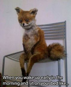 LOL!  lmao this mangy ass fox is so accurate of Ashley in the morning and Ashley whilst plotting someones death