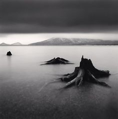 Michael Kenna, Tree Remains, Bifue, Hokkaido, Japan, 2004