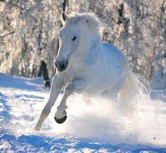 Caballo blanco en la nieve... Despues de un par de caminos que sobre pases sabiendo con fe que seras para mi ;) el ver estos animalitos salvajes con patitas negras me recordaran anl muaaaaaaaaa