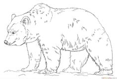 How to draw Grizzly Bear step by step. Drawing tutorials for kids and beginners.