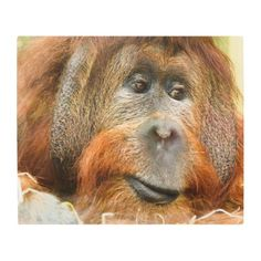 #Posters #Metal #Art - #Orangutan portrait metal print