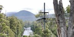 travel-tahune-air-walk-hanging-justthesizzle