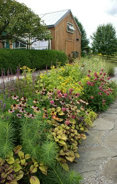 Mixed border with Echinacea and coleus