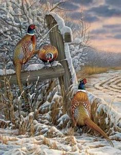 "Rosemary Millette Handsigned and Numbered Limited Edition: ""Forgotten Fenceline-Pheasants"" Wildlife Paintings, Wildlife Art, Animal Paintings, Wild Life, Hunting Art, Trophy Hunting, Pheasant Hunting, Bird Pictures, Outdoor Art"