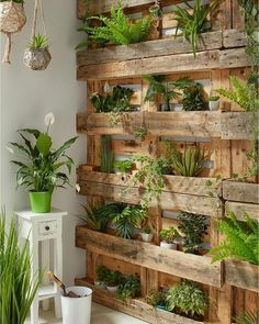 If you are looking for Diy Projects Pallet Garden Design Ideas, You come to the right place. Below are the Diy Projects Pallet Garden Design Ideas. Indoor Garden, Indoor Plants, Home And Garden, Big Garden, Balcony Garden, Garden Kids, Wall Of Plants Indoor, Garden Plants, Gravel Garden