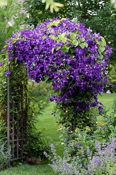 Cottage Garden: The Beauty of Messy Flowers - Town & Country Living Is it too soon in the year to talk about gardening? Because I want to share the beauty of messy flowers that are the signature look of a cottage garden. Small Garden Arbour, Garden Arbor, Cottage Patio, Town And Country, Country Living, Clematis Trellis, Purple Clematis, Metal Arbor, Clematis Montana
