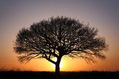 Sunset Oak by David Polonowski on 500px