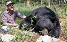Black Bear Basics