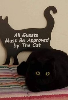 We often search the internet for funny cat pictures with captions or funny cat memes on a number of social media platforms. After all being crazy cat . Cute Animal Memes, Cute Funny Animals, Funny Cute, Cute Cats, Crazy Cat Lady, Crazy Cats, Cat Memes Clean, Funny Cat Memes, Memes Humor
