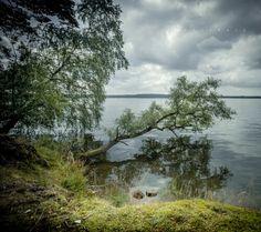 Bory Tucholskie okolice Funki jezioro Charzykowskie fot. +moje bory