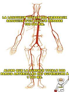 Le corps humain : une sacrée machine ...