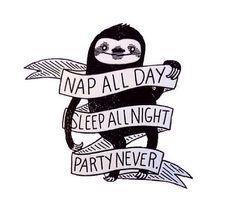 Sloth wisdom
