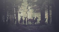 Forest + deer + awesome grading = love