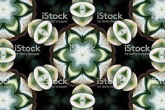 Lush Green Succulent Mandala for Modern Mindfulness Abstract Photos, Lush Green, Image Now, Succulents, Royalty Free Stock Photos, Mandalas, Succulent Plants