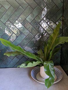 Black Grout, Backsplash, Kitchen Design, Plant Leaves, Bathrooms, Tiles, Green, Plants, Home