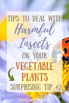 Ready to learn about keeping bugs out of your veggie garden, without those pesky bugs eating your crop? In this article, we explain the tips for ridding your garden of unwanted pests and provide organic gardening solutions, perfect for beginning gardeners and homesteaders. Tap to read more from My Favorite Homestead   Gardening and Homesteading Tips Starting A Vegetable Garden, Vegetable Garden For Beginners, Backyard Vegetable Gardens, Gardening For Beginners, Planting Vegetables, Growing Vegetables, Harmful Insects, Homestead Gardens, Hard Work And Dedication