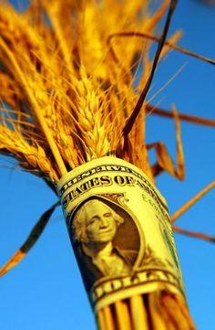 US Wheat Price Report