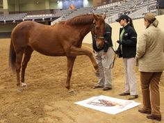 Funny Cide-2003 Kentucky Derby winner gives his stamp of approval to his portrait at Kentucky Horse Park.