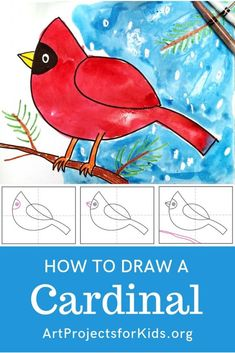 Draw a Cardinal · Art Projects for Kids Once you learn how to draw a cardinal, you'll have the perfect subject matter for a very colorful watercolor resist project. Christmas Art Projects, Spring Art Projects, Easy Art Projects, Projects For Kids, Art Project For Kids, Christmas Art For Kids, Easy Art For Kids, Spring Crafts, Drawing For Kids