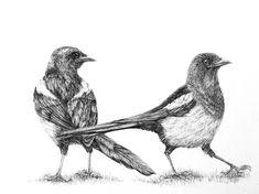 Sue Side 'Magpies' graphite 13x19cm