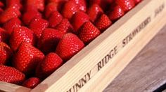 Fresh strawberries from Sunny Ridge Strawberry Farm Strawberry Farm, Strawberry Summer, Strawberry Fields Forever, Farm Shop, Places To Eat, Wine Recipes, Sunnies, Raspberry, Fruit