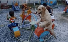 Watch This Golden Retriever Experience True Joy As He Rides A Merry-Go-Round