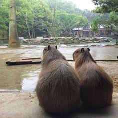 おはようございます。雨の朝です。