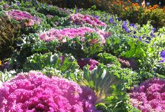 These plants produce bountiful harvests while blending in seamlessly with showier selections