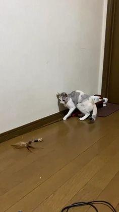 Animal Jokes, Funny Animal Memes, Funny Cat Videos, Funny Animal Pictures, Cat Memes, Funny Cat Fails, Funny Cute Cats, Cute Baby Cats, Cute Little Animals