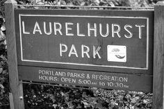 Laurelhurst Park in Portland is the perfect spot for a hike, or to watch a Movie in the Park. Find out 24 other things you can do in Portland here! http://liveportlandoregon.com/2013/10/08/25-awesome-things-to-do-in-portland/