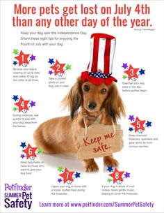 July 4 can be a lot of fun, but it brings a lot of dangers. More pets get lost on July 4 than any other day. Repin to spread the word, then click through to learn more about keeping your pet safe on Independence Day.