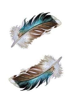 Two Mallard Feathers by jodyvanB in St. Catharines, Canada