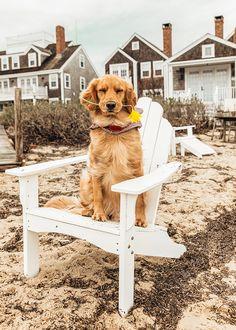 Love Animals N Nature Golden Life, Ocean House, Classy Girl, Girls Wear, Dog Photos, Girls Best Friend, Dog Days, Pet Birds, Dogs And Puppies