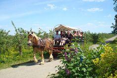 Een rondleiding met paard en wagen bij Appels plukken Olmenhorst
