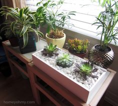 Love the idea of the three plants in one
