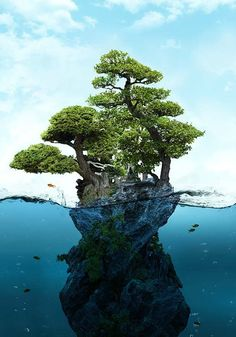 My own private forest, my own private sea.