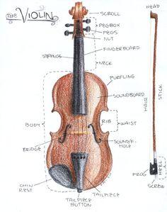 Violin_Diagram_for_Science_by_schermanfreak
