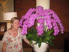 Жалко орхидею! Реанимируем?. Обсуждение на LiveInternet - Российский Сервис Онлайн-Дневников