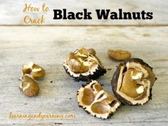 learningandyearning.com/***How to crack black walnuts, plus links to recipes and more