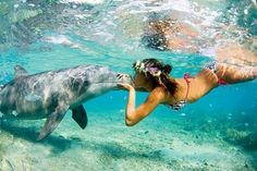 borabora dancing with Dolphins