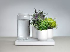 Pikaplant is raising funds for Tableau : Automatic House Plant Watering Tray on Kickstarter! Tableau is a work of art. It waters herbs and house plants in a wet-dry cycle using zero electricity, just like nature intended. Diy Plante, Self Watering Plants, La Germination, Contemporary Planters, Modern Planters, Futuristic Home, Turbulence Deco, Terrariums, Tableau Design