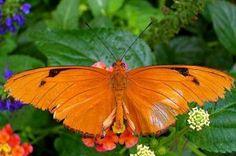 Farfalle/Butterfly ~ Il Magico Mondo dei Sogni