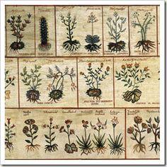 Índice detallado de enfermedades y de las plantas más indicadas para su tratamiento.