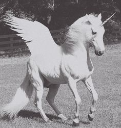 oh my childhood dreams just came true!!! I want one and he shall be named Pegasus. :)