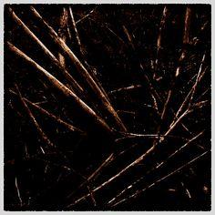 Branches - by Attila Simon