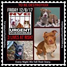 Dedicated To Saving Nyc Shelter Animals Best Dogs For Families Dogs Foster Dog