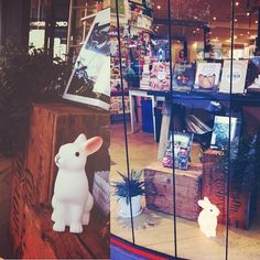 Rabbits and House Plants and Books - Ariel Books, an independent bookseller based in Sydney, Australia.