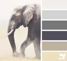 design seeds: elephant tones I have to pin this. It's an elephant! Colour Pallette, Colour Schemes, Color Patterns, Design Seeds, Color Composition, Colour Board, Color Stories, Color Swatches, Color Theory