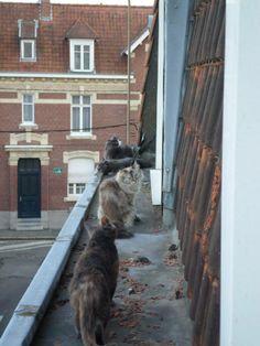 Belle photo de 4 Chats sur un toit