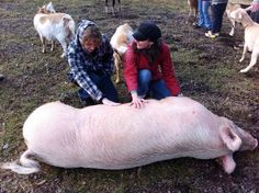 From Sanctuary One: Students of all ages typically enjoy visiting our care farm for a day of service-learning.